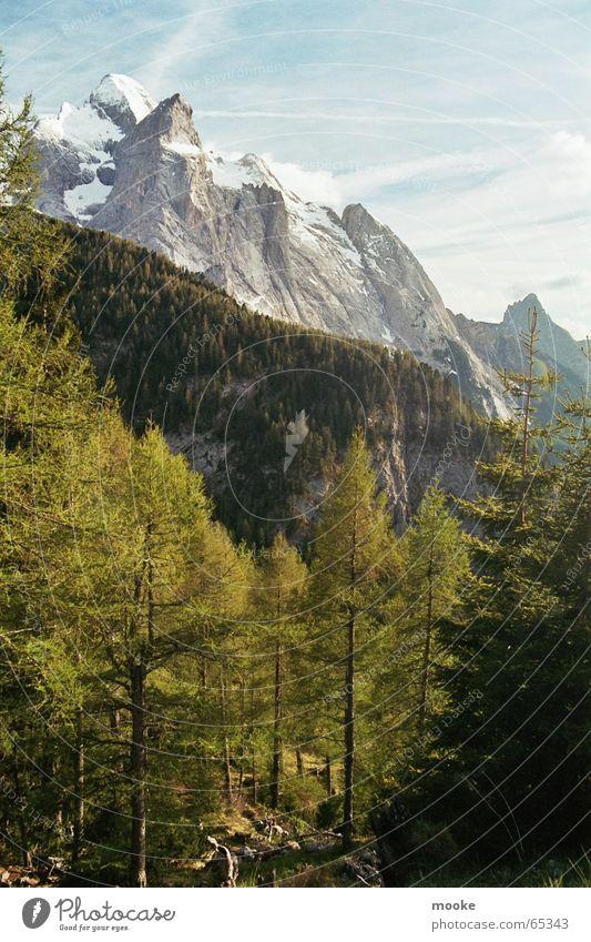Dolomites Forest White Gray Green Mountain Rock Snow Blue
