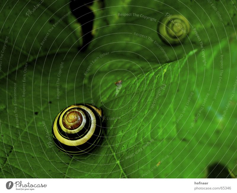 schnecke@blattgrün.de Leaf Green Summer Winter House (Residential Structure) Vessel Black Yellow Spring Autumn Snail hofnaar Circle