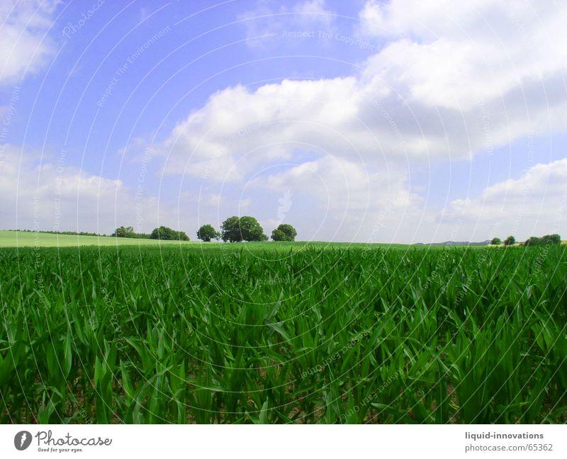 growing maize field Maize field Horizon Clouds Wuppertal Tree Green Sky