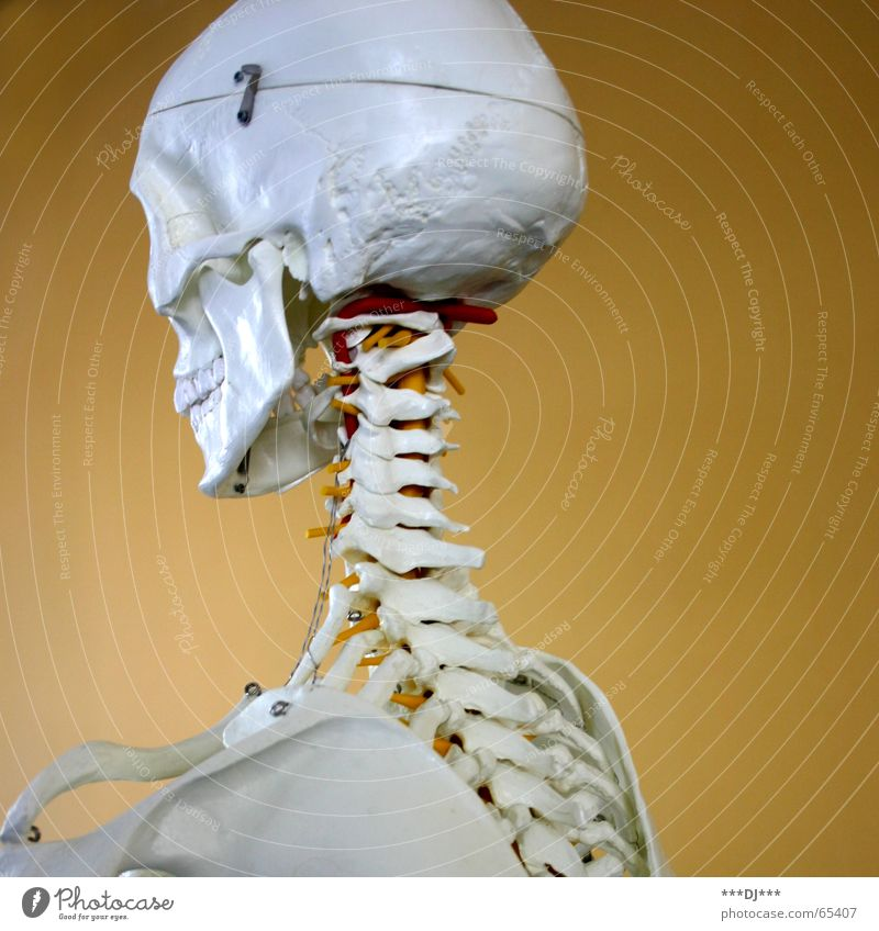 Puzzle for advanced players Skeleton Health care Exhibit Checkmark Spinal column Back of the head Nape Thin Happiness Human being Death's head Offense end
