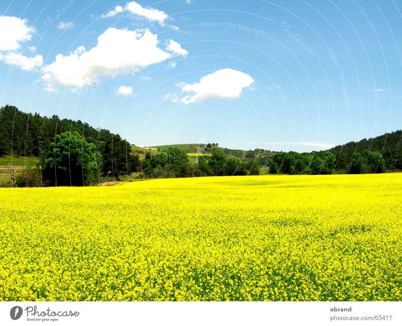rapeseed body Canola field Multicoloured Windows XP Similar Southern France Exterior shot