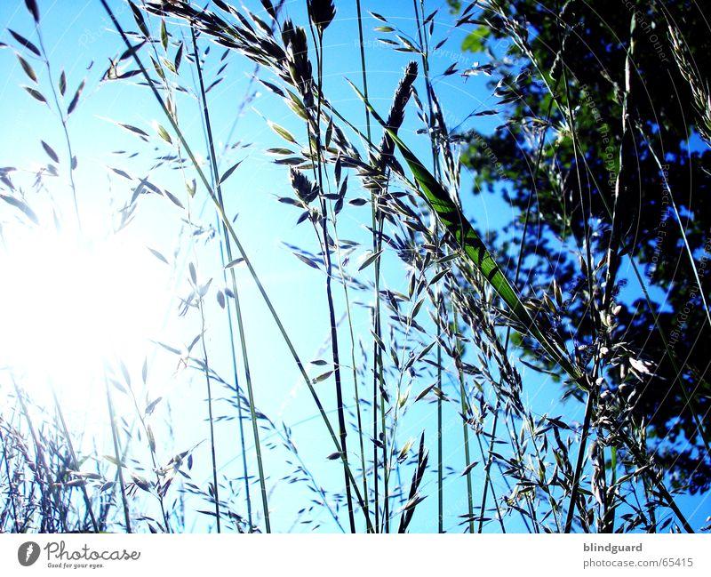 Sky Sun Green Blue Grass Bushes Under Dazzle Margin of a field