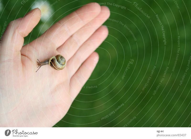 Nature Hand Animal Fingers Near Contact Daisy Snail Feeler Hybrid Snail shell