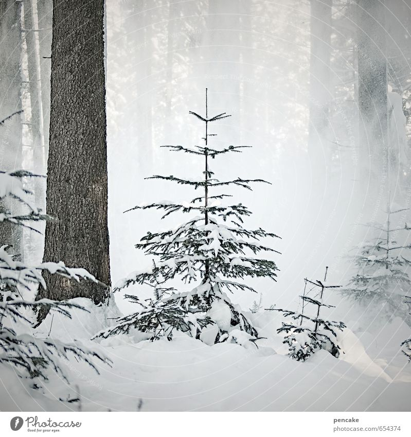 e't be afraid Nature Landscape Elements Winter Ice Frost Snow Snowfall Tree Forest Sign Esthetic Threat Cold White Unwavering Fir tree Small snow break
