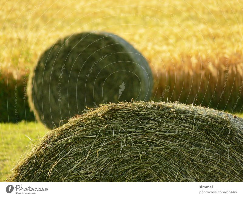Green Summer Yellow Meadow 2 Field Depth of field Bundle Bale of straw