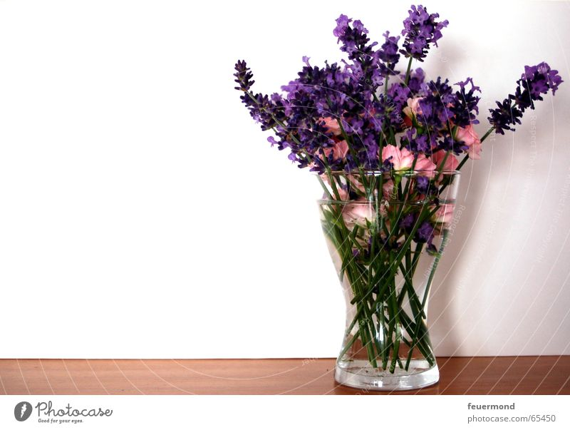 sweet little posy Bouquet Flower Blossom Lavender Rose Vase Wall (building) Spring Summer Congratulations Glass shelf bloom Wall (barrier) Medicinal plant