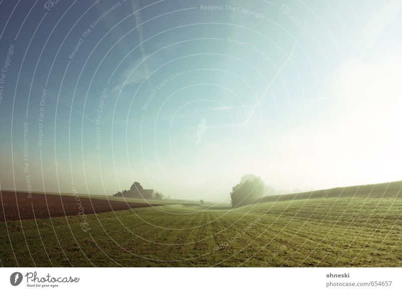 Nature Sun Relaxation Landscape Loneliness Calm Far-off places Spring Grass Freedom Moody Horizon Dream Field Fog Earth