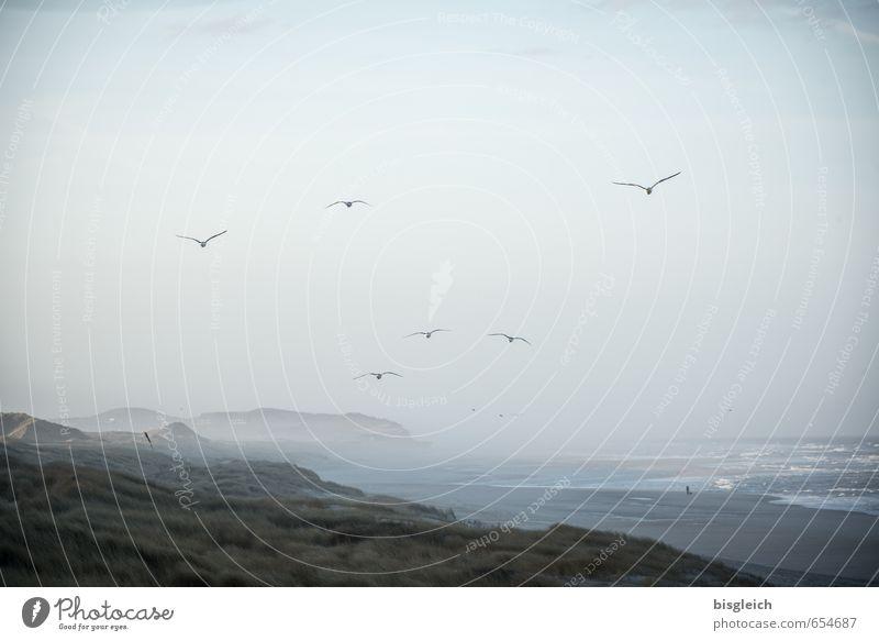 Sky Nature Blue Ocean Landscape Animal Far-off places Beach Environment Coast Germany Bird Flying Europe Dune North Sea