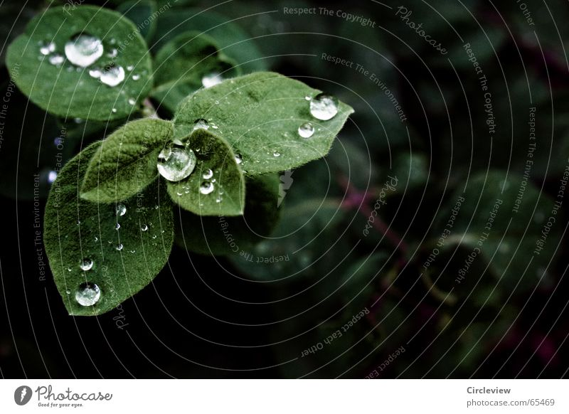 Nature Plant Green Water Leaf Sadness Emotions Autumn Moody Rain Glittering Drops of water Wet Rope Grief Distress