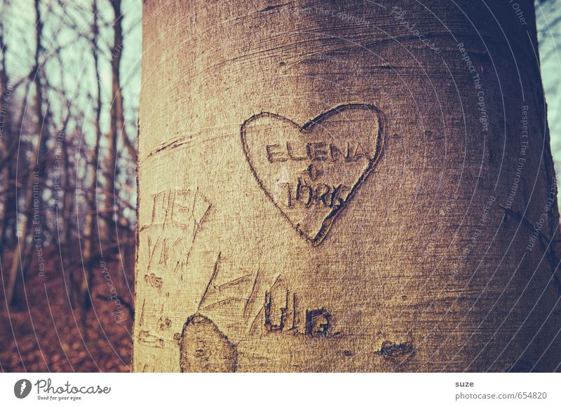 E+J=<3 Leisure and hobbies Decoration Couple Environment Nature Tree Forest Sign Signs and labeling Heart Love Together Small Natural Brown Emotions Happy