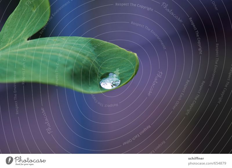 resting place Plant Leaf Wet Green Rachis Leaf green Leaf filament Drops of water Dripping Safety (feeling of) Grief Sadness Rainwater Curved Bulge Concave