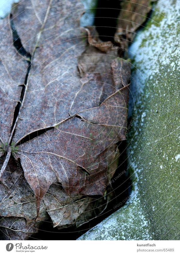 Old Tree Green Leaf Colour Cold Autumn Brown Wind Fresh Point Stalk Seasons Crack & Rip & Tear Fragile Dried