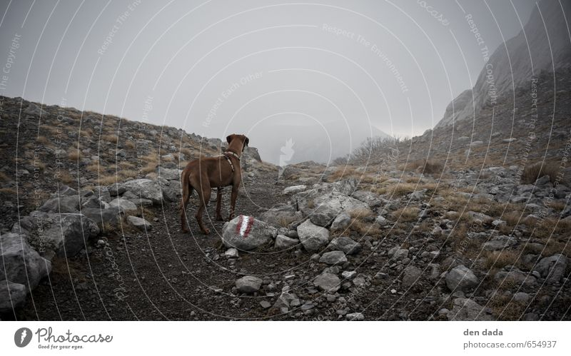 Dog Nature Landscape Animal Mountain Autumn Grass Rock Brown Air Fog Wind Stand Hiking Trip Adventure