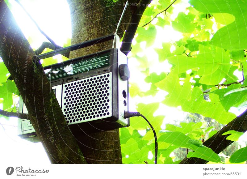 Tree Sun Green Summer Leaf Music Pure Branch Radio (device) Radio (broadcasting) Antenna Tape cassette Old-school Broacaster Cassette tape recorder Dreadful