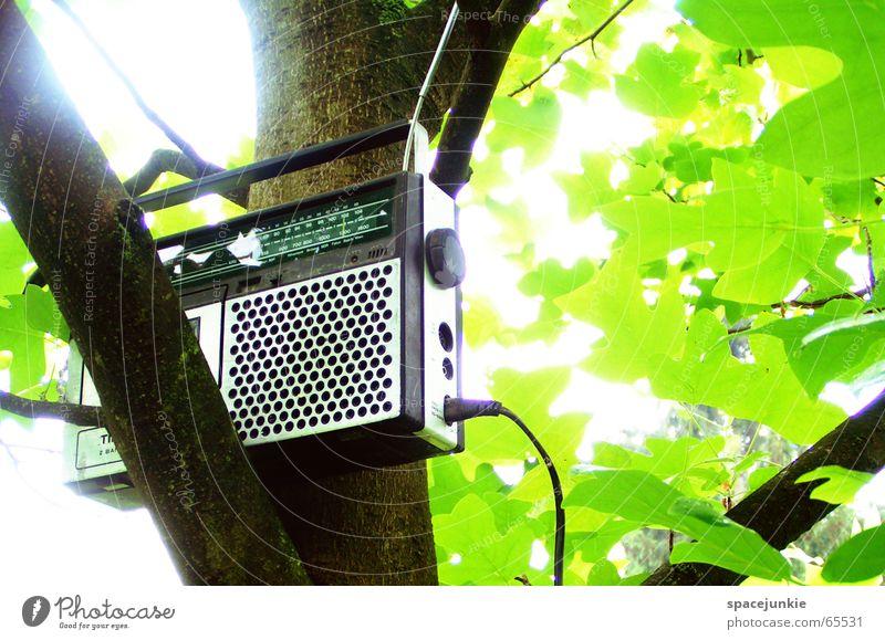 Tree Sun Green Summer Leaf Music Pure Branch Radio (device) Radio (broadcasting) Antenna Tape cassette Old-school Broacaster Cassette tape recorder Dreadful