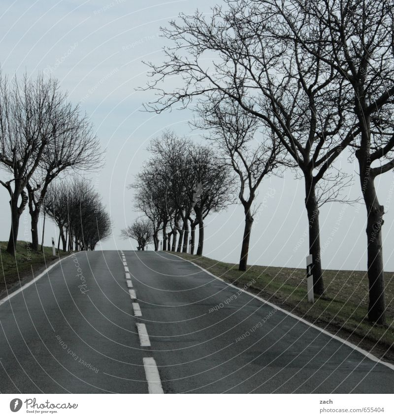 Plant Tree Winter Cold Street Meadow Autumn Lanes & trails Grass Gray Line Rain Field Signs and labeling Speed Driving