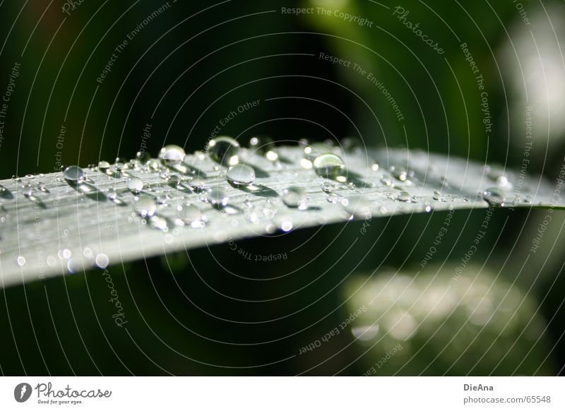 After the rain... Nature Water Rain Green leaf raindrops sunshine Colour photo Exterior shot Deserted Day Blur