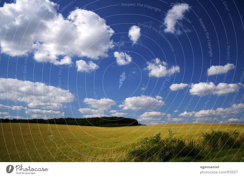 Nature Sky White Blue Summer Clouds Forest Meadow Field