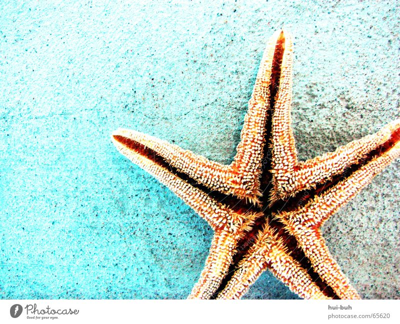 Water Blue Vacation & Travel Ocean Wall (building) Mouth Star (Symbol) Ground 5 To feed Thorny Spotted Prongs Symbols and metaphors Starfish