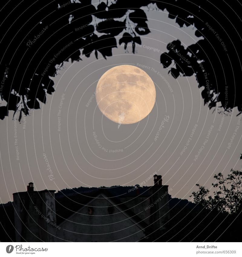 moon Landscape Sky Moon Full  moon Summer Beautiful weather Tree Garden Geneva Town Downtown House (Residential Structure) Roof Chimney Large Romance