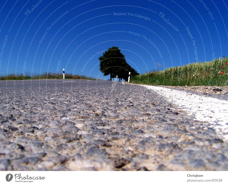 ant's perspective Field Tree Traffic lane Stripe Pothole Curb Asymmetry Background picture Signs and labeling road Street shag Macro (Extreme close-up)