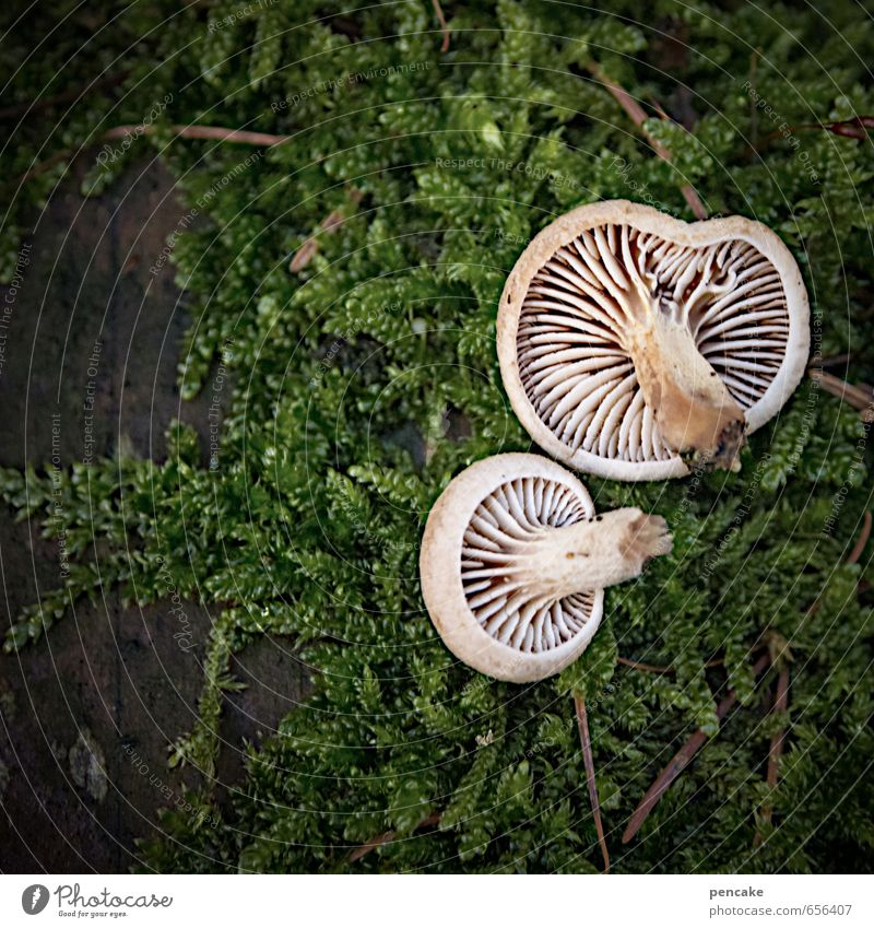 winter mushrooms Environment Nature Plant Elements Earth Winter Climate Climate change Moss Sign Esthetic Mushroom Woodground Lamella Velvet foot Root