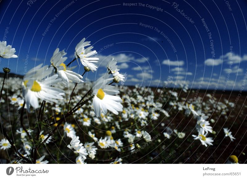Tell me where the flowers are... Flower Clouds Gale Hold Argentina Wind Sky Movement