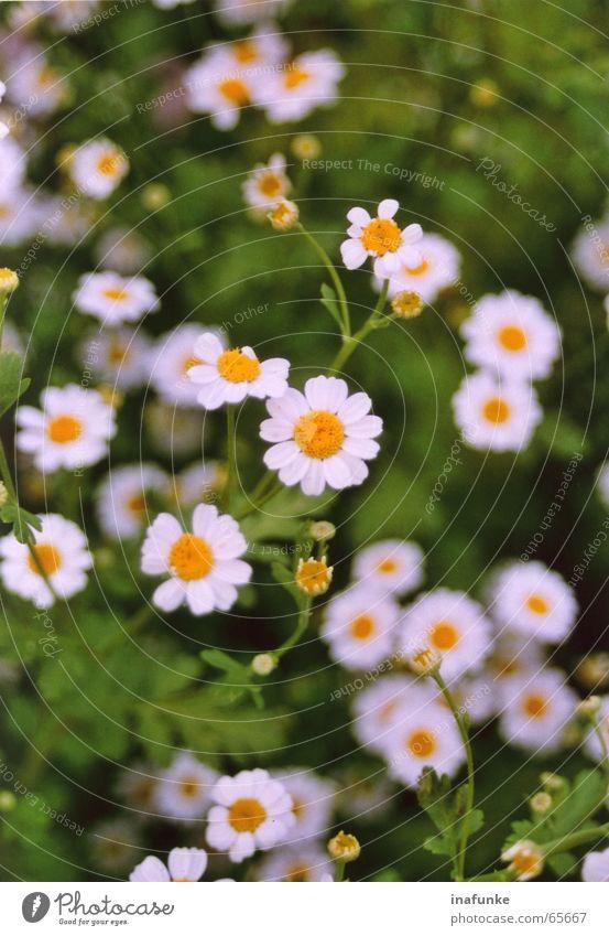 small white Flower Plant White Yellow Green Botany Small Blur Nature