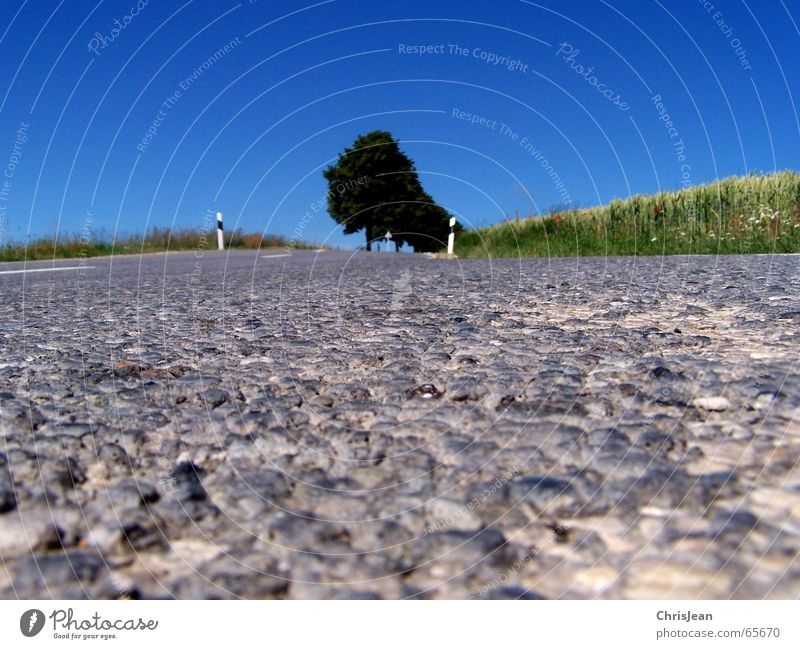 Ant perspective 2 Field Tree Traffic lane Stripe Pothole Curb Asymmetry Background picture Signs and labeling road Street shag Macro (Extreme close-up)