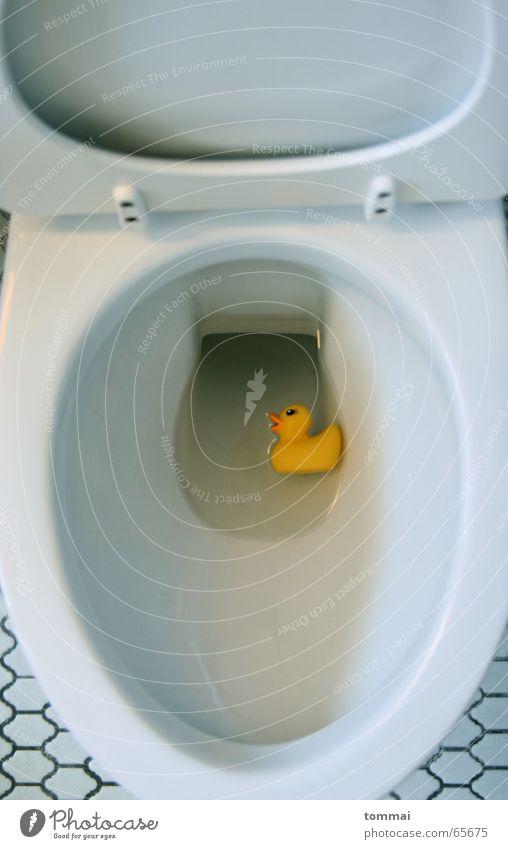 Blue Water White Eyes Yellow Swimming & Bathing Toilet Float in the water Duck Beak Eyebrow Duckling