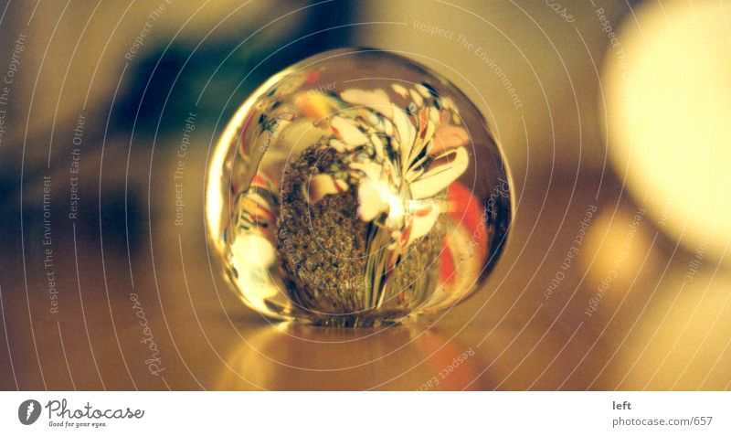 orchid ball Glass ball Orchid Physics Reflection Paperweight Things Warmth