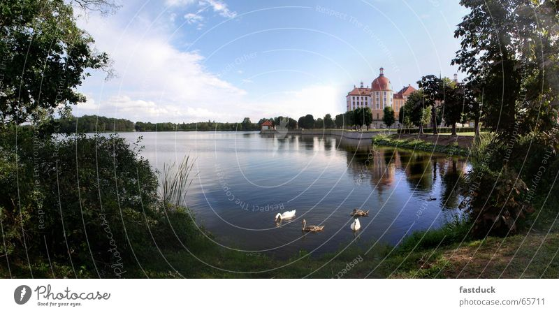 Swans to Moritzburg Park Reflection Saxony Green Tree Forest Moritzburg castle Castle Water Blue