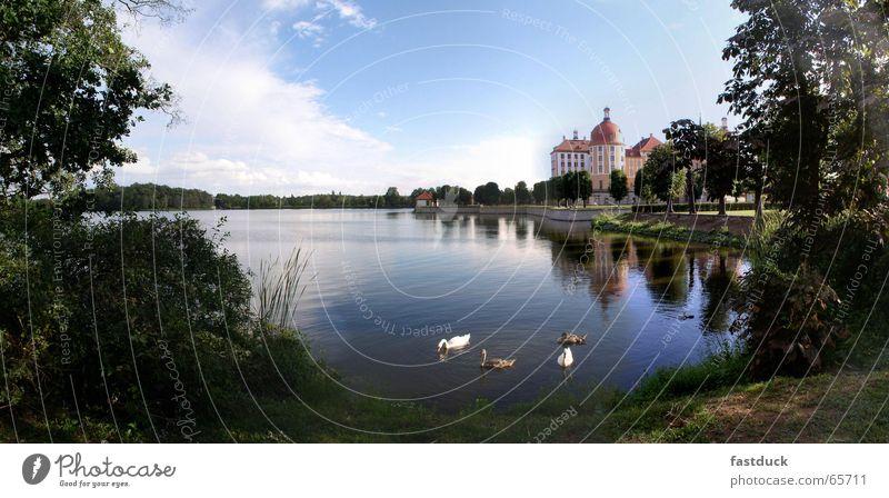 Water Tree Green Blue Forest Park Castle Swan Saxony Dresden Moritzburg Moritzburg castle