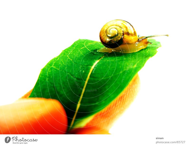 Nature Beautiful Tree Green Plant Leaf House (Residential Structure) Animal Brown Fingers Sweet Round Friendliness Snail Feeler Slowly