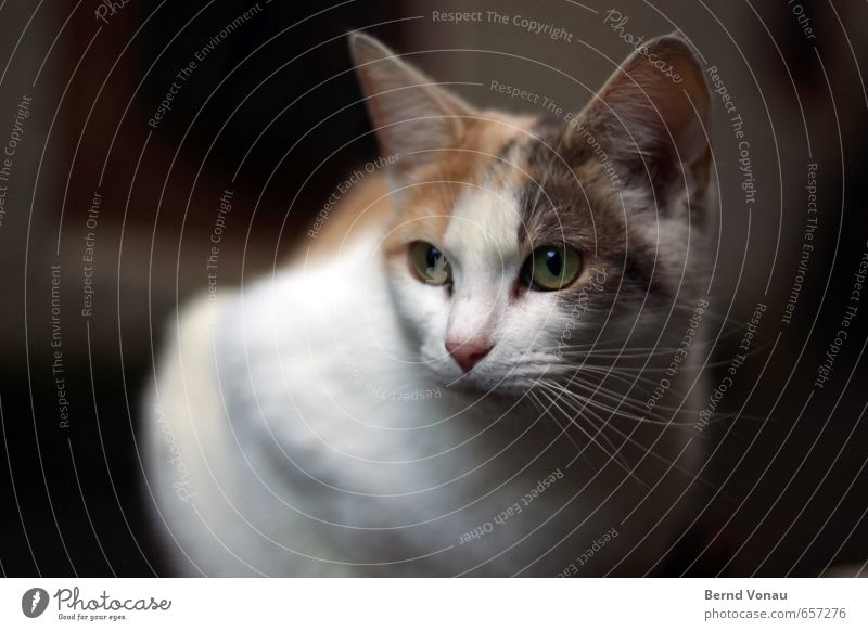 ^^ Cat Animal face 1 Brown Gray Black White Calm Sit Whisker Beautiful Watchfulness Shadow Wait Downtown Pet Colour photo Exterior shot Deserted Day