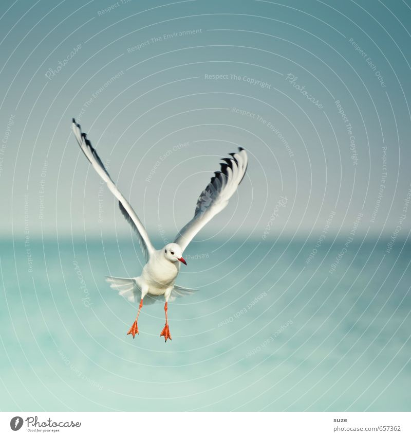 air number Freedom Ocean Environment Nature Animal Elements Water Sky Horizon Climate Weather Baltic Sea Wild animal Bird Wing 1 Flying Authentic Fantastic