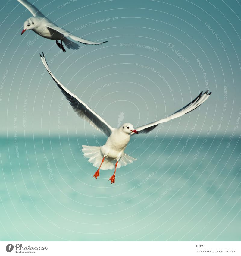 With ease Beautiful Freedom Ocean Environment Nature Animal Elements Water Sky Horizon Climate Weather Baltic Sea Wild animal Bird Wing 2 Flying Authentic