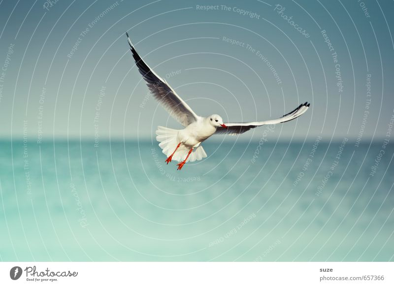 Sky Nature Blue Beautiful Water Ocean Animal Environment Freedom Horizon Bird Flying Weather Wild animal Authentic Climate