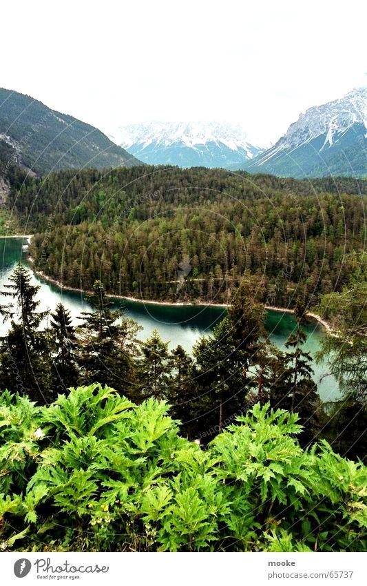 White Green Forest Snow Mountain Gray Rock Valley Mountain lake Zugspitze