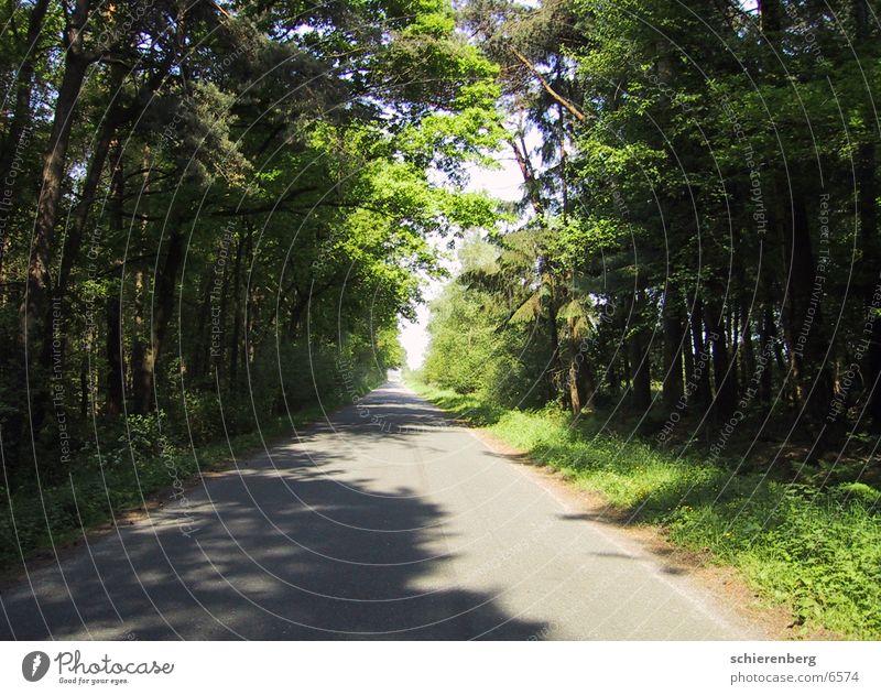 Tree Green Street Lanes & trails