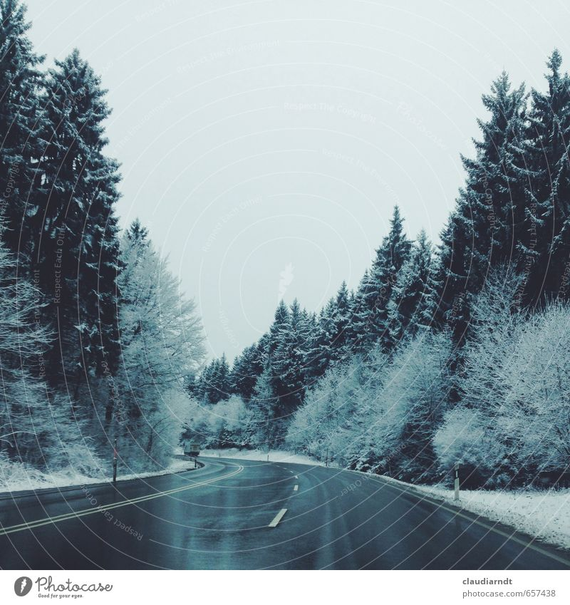 winter forest Environment Nature Sky Winter Ice Frost Snow Tree Fir tree Coniferous forest Forest Black Forest Street Vacation & Travel Cold Wet Blue Gray White