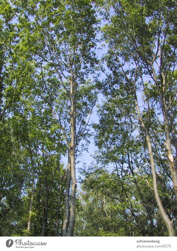 skytrees Tree Green Sky