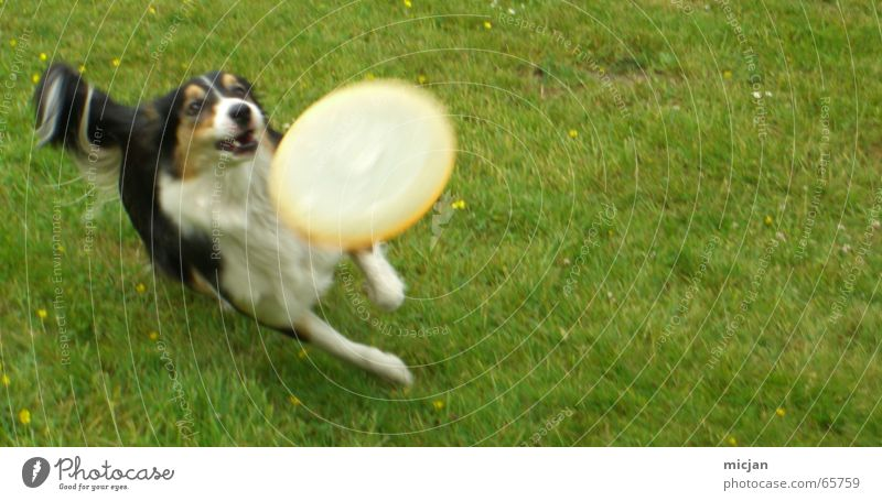 White Green Joy Black Animal Meadow Jump Playing Movement Dog Brown Running Speed Action Lawn Leisure and hobbies