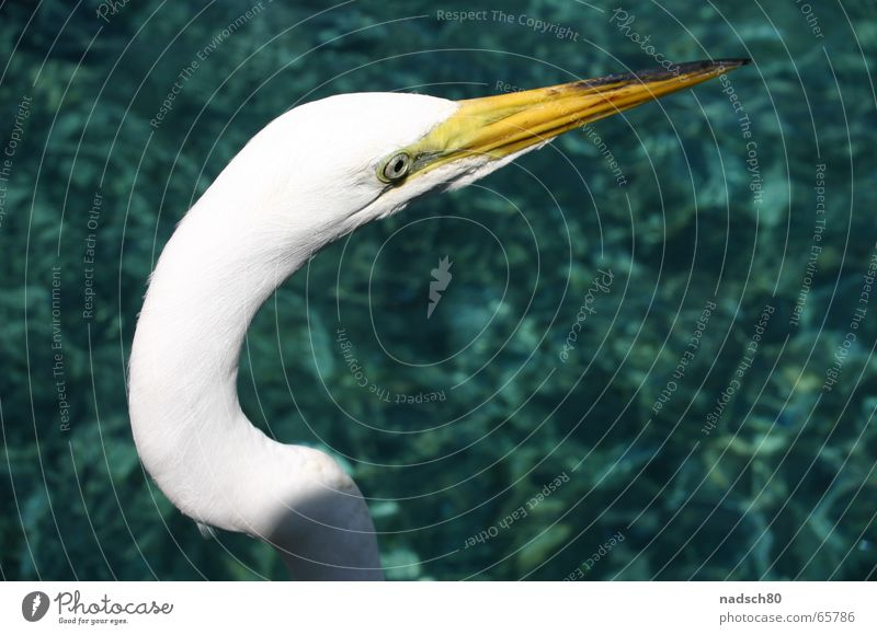 bird Bird Zoo Ocean White Beak Loneliness Clarity Water Near Arch
