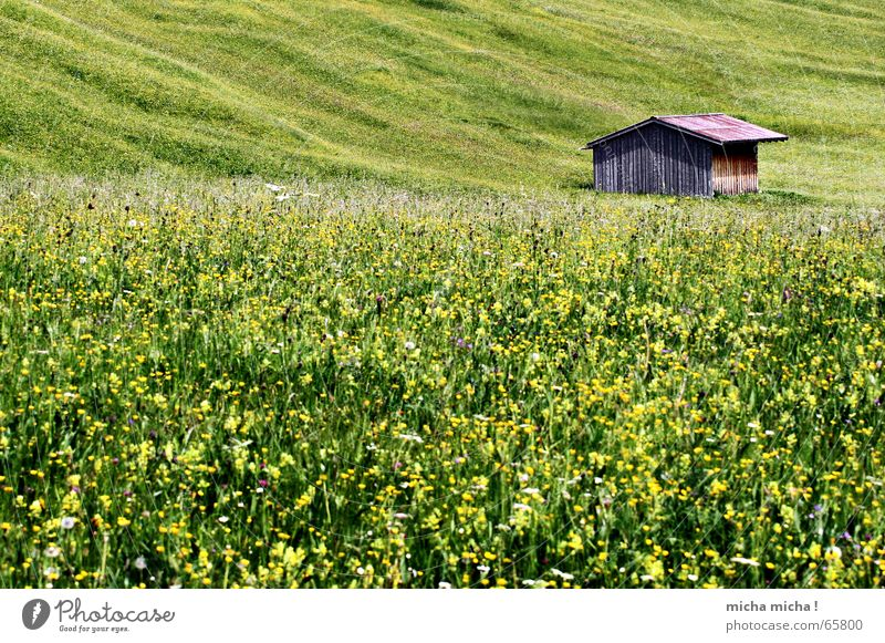 Summer meadow hut Meadow Allgäu Loneliness Calm Green Yellow Slope Wood Hut