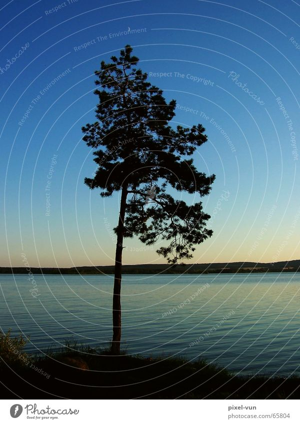 relaxation Tree Fir tree Individual Calm Idyll Romance Relaxation Evening Twilight Lake Reservoir Horizon Decent Light Thought Peace Peaceful Dusk Water Sky