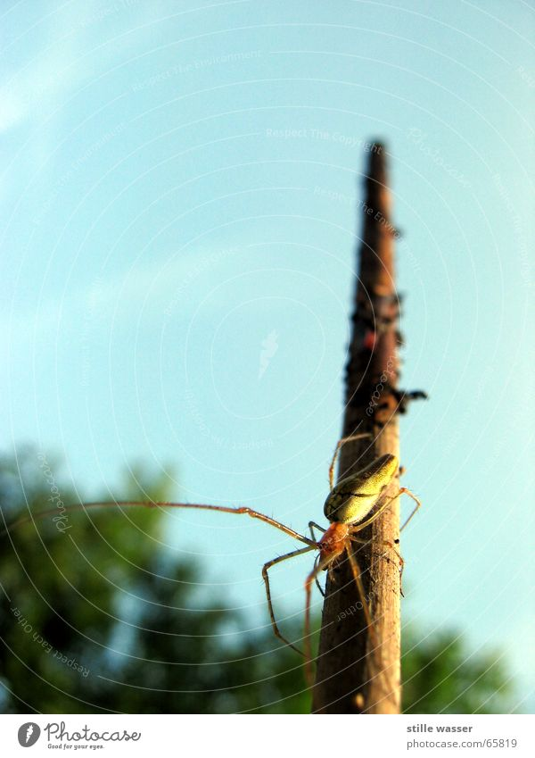 spider Spider Stick Insect Tree Disgust Extra Sky Macro (Extreme close-up) Oder not