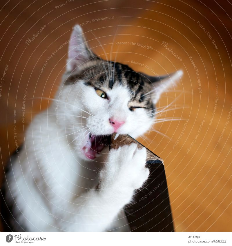 Cat Animal Baby animal Eating Curiosity Discover Pet Bite Discern