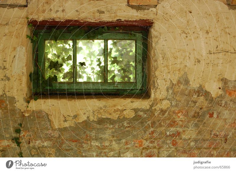 Old Green Plant House (Residential Structure) Loneliness Wall (building) Window Wall (barrier) Building Romance Vantage point Derelict Transparent Plaster