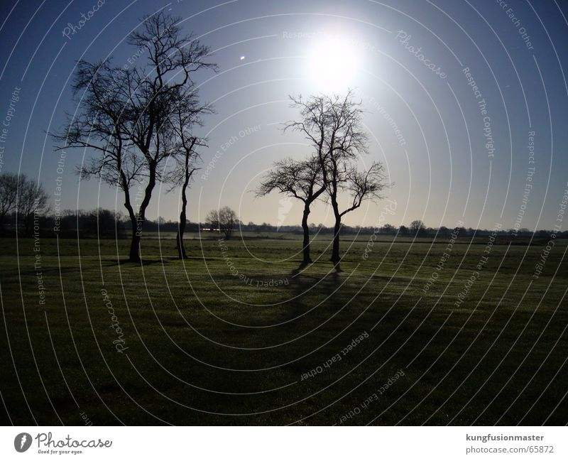 Tree Winter Landscape Stars Moon Celestial bodies and the universe Full  moon